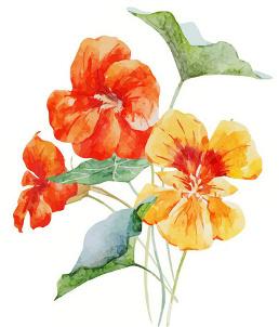 Ti Fleur Fanee L Hymne Reunionnais De Georges Fourcade